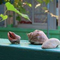 Дети моря :: Наталья Джикидзе (Берёзина)