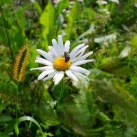 Сладкий нектар полевых цветов :: Дубовцев Евгений