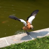Спасайся,золотые рыбки... :: Татьяна Симонова