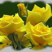 Интересен символ жёлтой розы :: Татьяна Смоляниченко