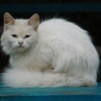 Кошечка :: Арина Саенко