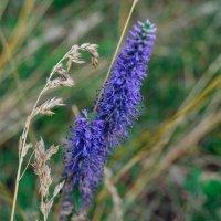 Растительность :: Света Кондрашова