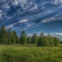 Деревья, небо и трава :: Ирина Крохмаль