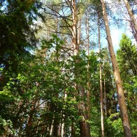 Смешанный лес :: Елена Федотова