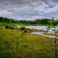 У озера Плавучее! :: Владимир Шошин