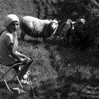 Пастушка :: Людмила Синицына