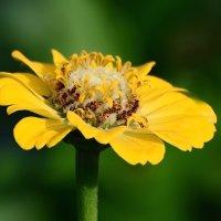 Про цветы. :: Paparazzi