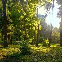 утренний луч солнца :: valeriy g_g