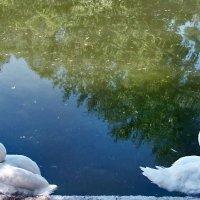 Украшение пруда! :: Наталья