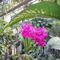 Орхидея в Аптекарском огороде. :: Larisa Ereshchenko