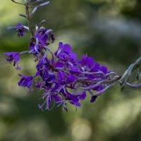 Гнутые цветы :: Яков Реймер