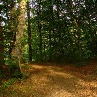 Адыгея. В лесу :: Надежда