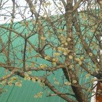 Ранняя весна :: Надежда