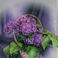Весенний букет :: Татьяна Кретова