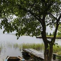 на озере :: ник. петрович земцов