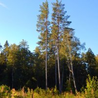 опушка леса :: linnud