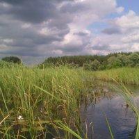 Река Битюг в июне 2016. :: Ольга Кривых