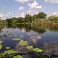 Моё восхищение реке Битюг! :: Ольга Кривых
