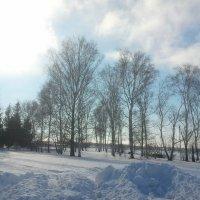 Морозный день :: марина ковшова