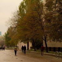 прохладное утро :: Дмитрий Паченков