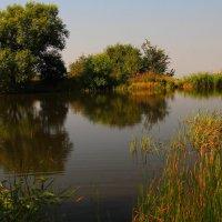 Полёт дикой утки над горным озером. :: Vladimir 070549