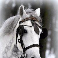 Голова лошади  / 3 / :: Сергей