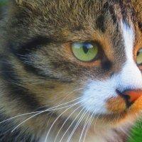 Котенька ! :: Татьяна ❁