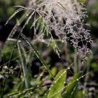 травы в тумане :: Анна
