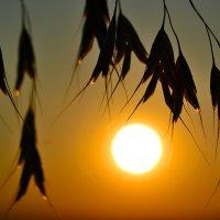 На закате... :: Nina Streapan