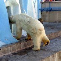 """Серия - """"Белые медведи """" . Что это вы там делаете ? :: Мила Бовкун"""
