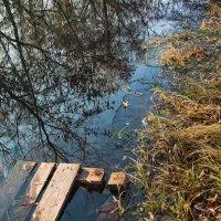 Первый ледок, там где вчера купались :: Мария Богуславская