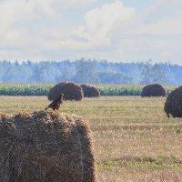 Мышиный пастух :: Ирина Приходько