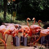 Фламинго :: Ольга Васильева