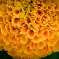 цветок :: Ирина