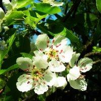 Весна на даче :: татьяна