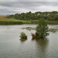 Летний день на реке. :: Андрий Майковский