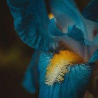 Blue mood :: Cristina Garabajiu