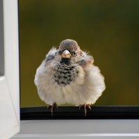 серый, но красивый) :: linnud