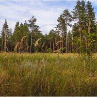 прогулка по лесу :: Екатерина ...