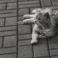 Собственно Кот :: Val Савин