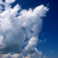 Sky rabbit :: Олег Шендерюк