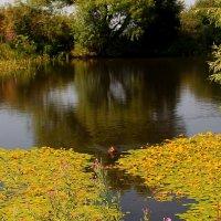 Одинокая дикая уточка на горном озере. :: Vladimir 070549