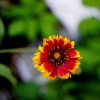цветик-семицветик :: Ольга Cоломатина