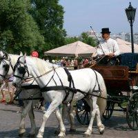 готовы-поехали-кони поданы :: Олег Лукьянов