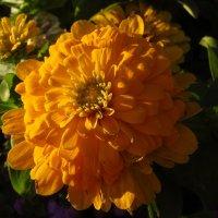 Неизвестный мне цветок :: Андрей Лукьянов