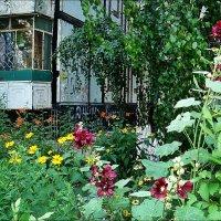 Лето в нашем дворе :: Нина Корешкова