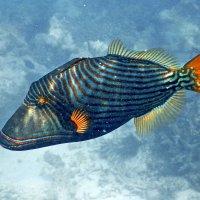 Рыба 1 :: Сергей Рычков