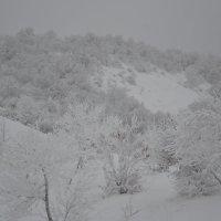 зима :: Марина Титкова