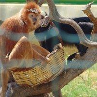 Удивленная обезьянка. :: Оля Богданович