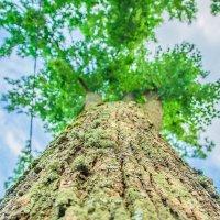 просто дерево :: Александр Байков